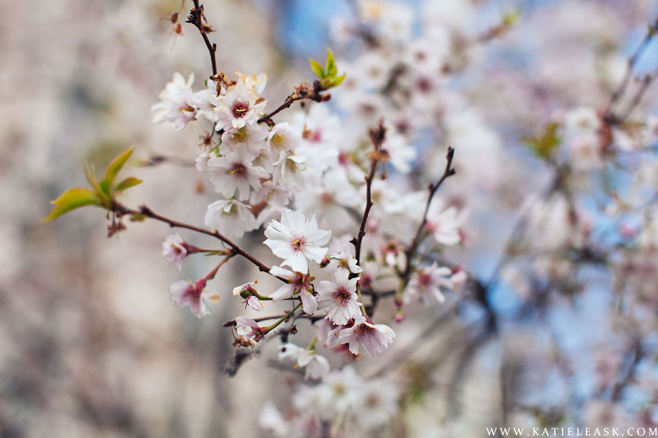 Katie-Leask-Photography-024--Blossom-Flowers--FB